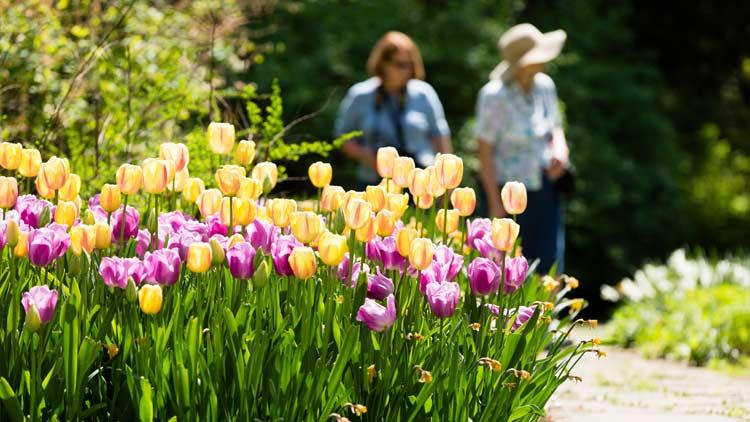 Springblooms04
