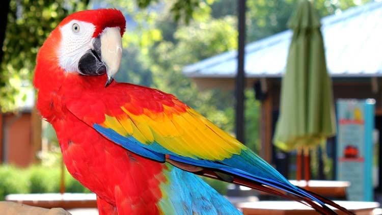 Macaws02