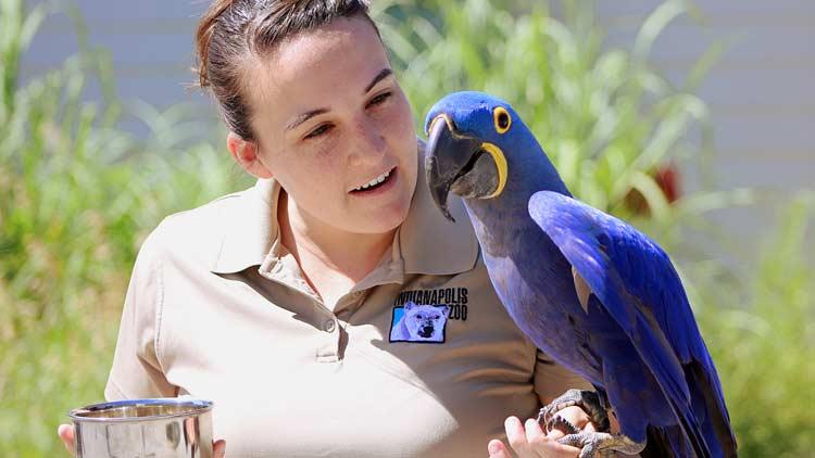 Macaws04