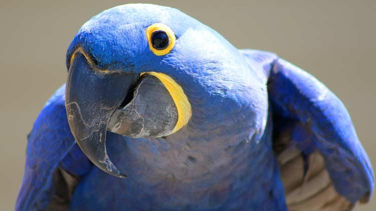Macaws06