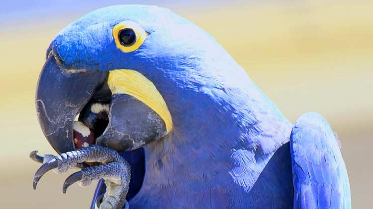 Macaws08