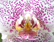 O.M.G. (Odd, Magical, Gorgeous) Orchids!