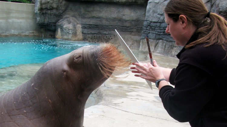 Walrus Painting at the Zoo