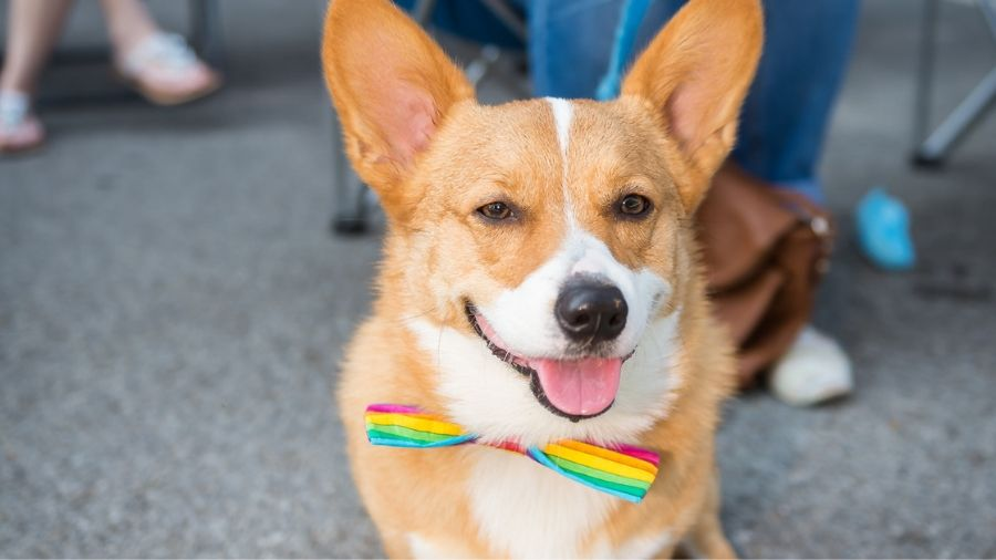 Dogs Get Pampered People Make Friends at Yappy Hour