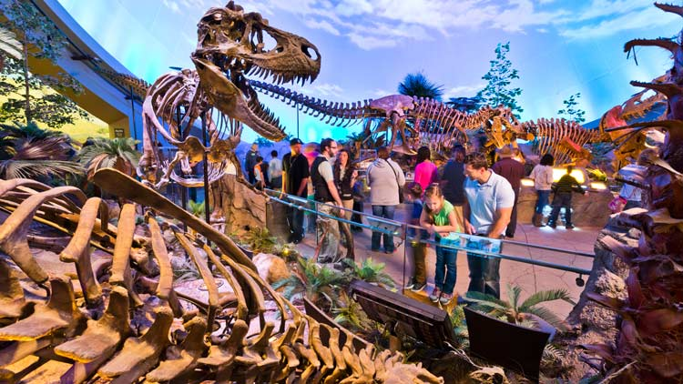 Dinosphere at the Childrens Museum