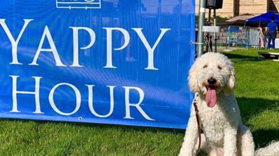 "White Dog Beside a sign that reads ""Yappy Hour"""