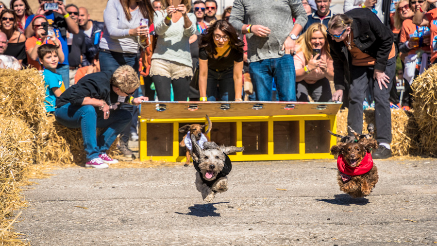 A crowd of people watching two dogs race down a path