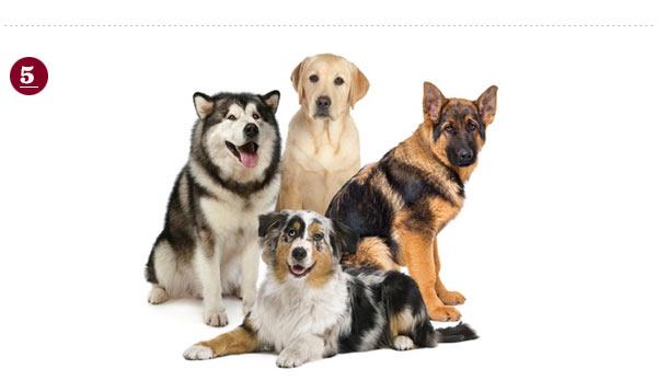 Dog Trivia Night